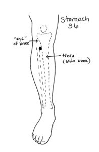 Stomach 36 ST36 Acupressure for Cramps healgrowthriveflow.com